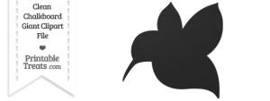 Clean Chalkboard Giant Hummingbird Clipart